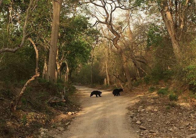 Écotourisme en Inde : 3 sites d'intérêt naturels incontournables à visiter
